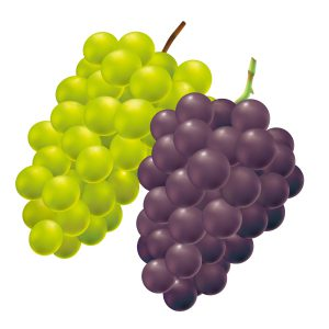 ブドウ セット